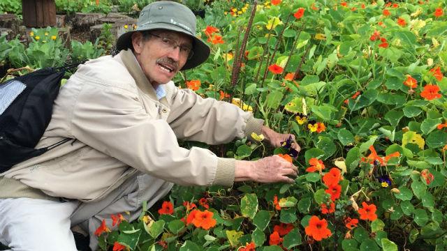 Plantas Medicinales - Foto: bogota.gov.co-Javier Cortés