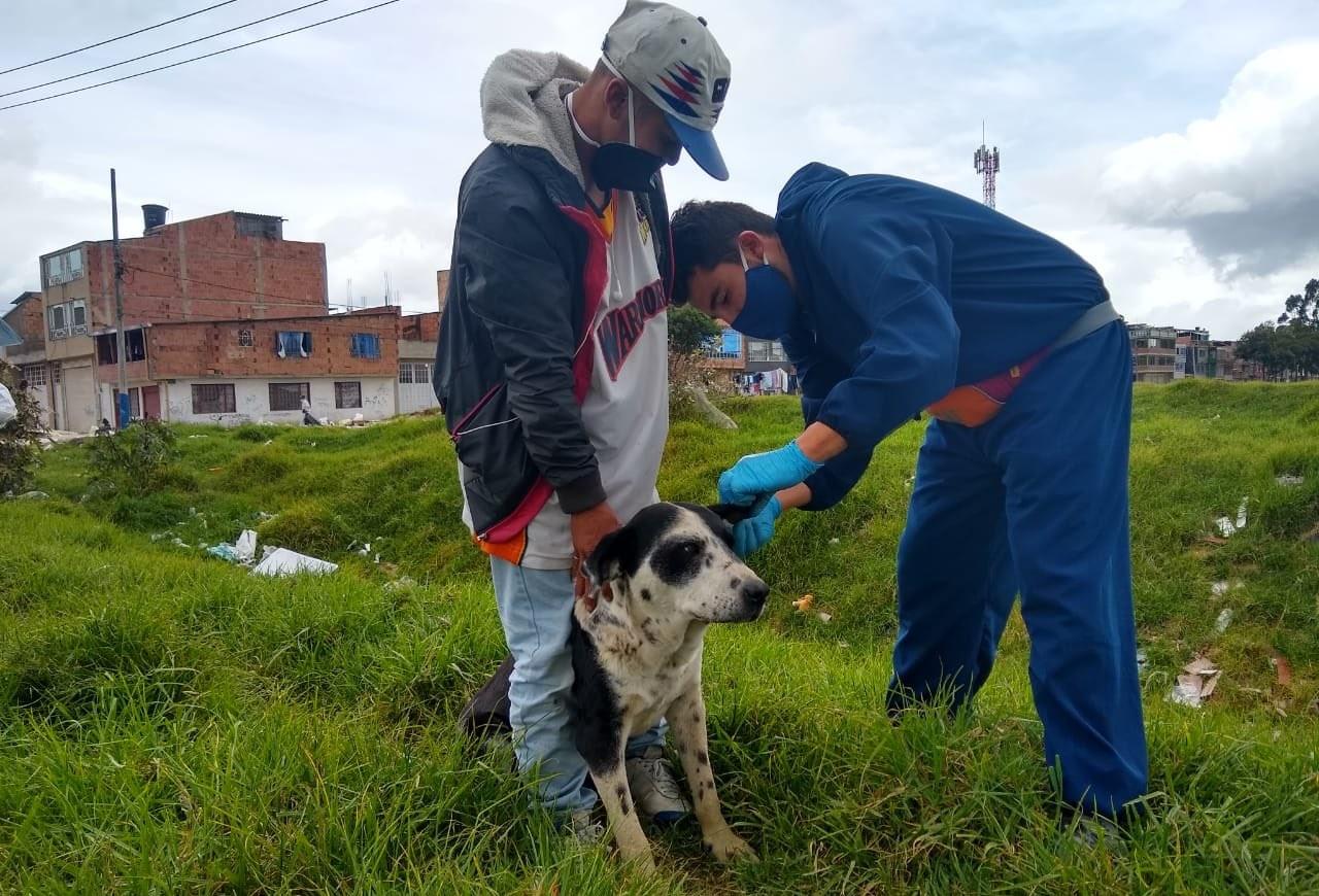 Imagen de la atención a un canino en Bosa