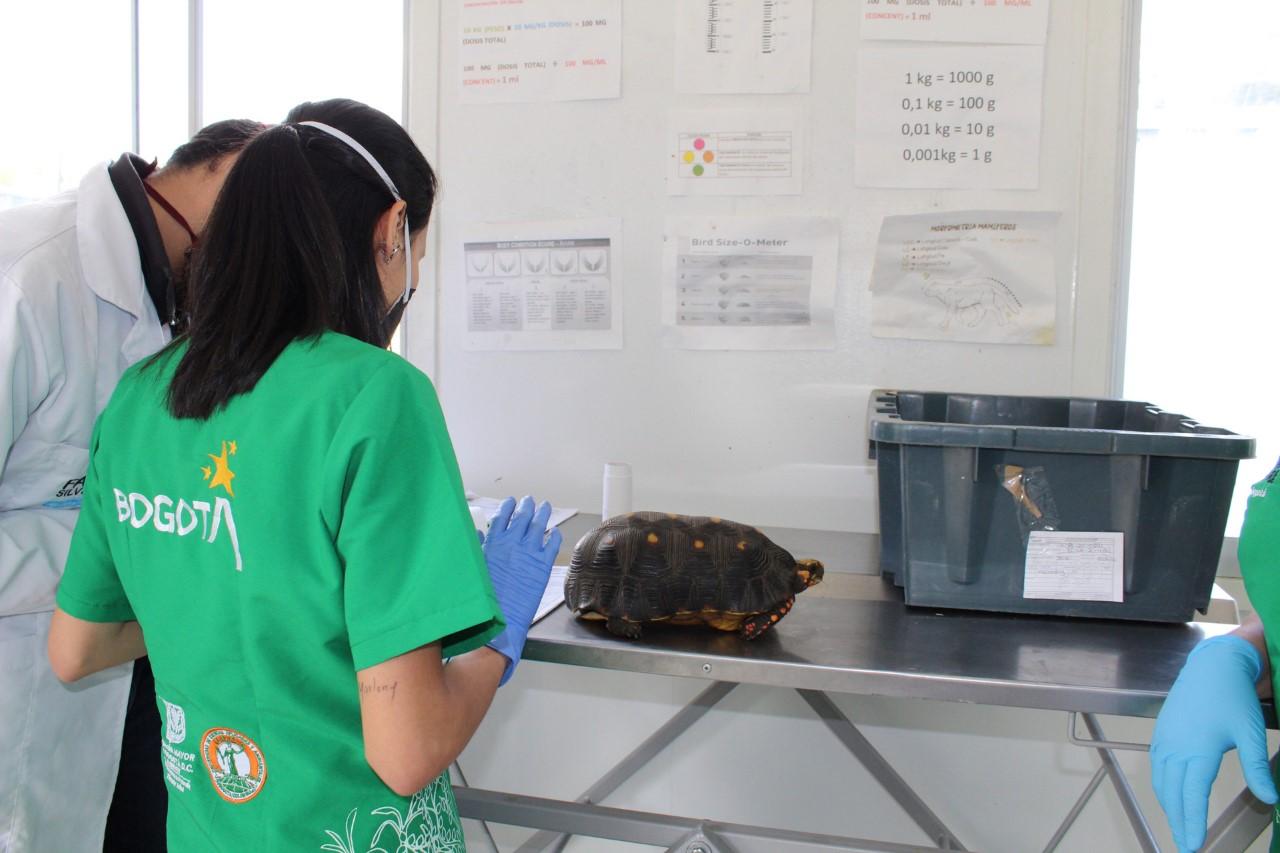 Imagen del personal revisando una tortuga.