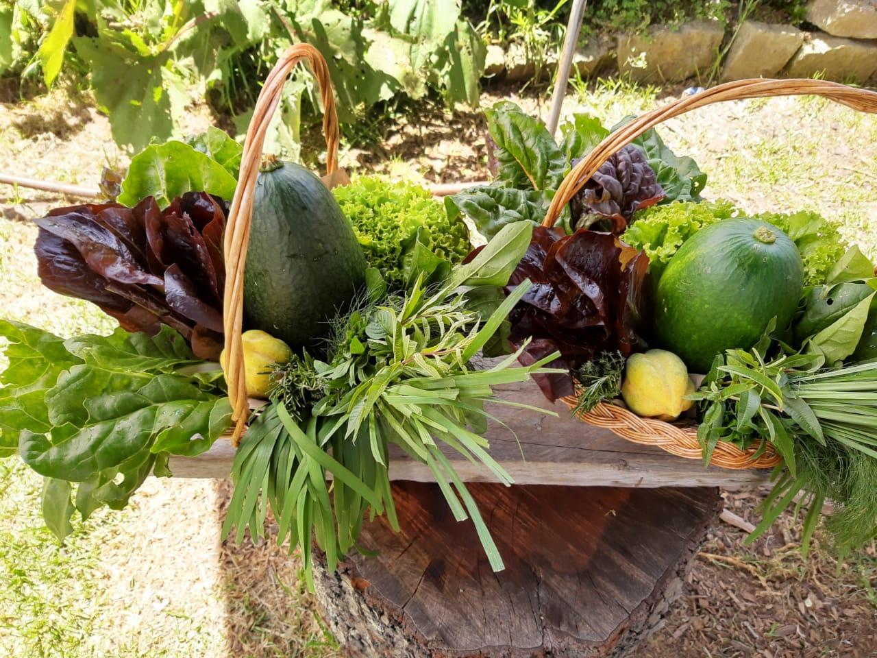 Cosecha de vegetales de una de las huertas del Jardín Botánico.