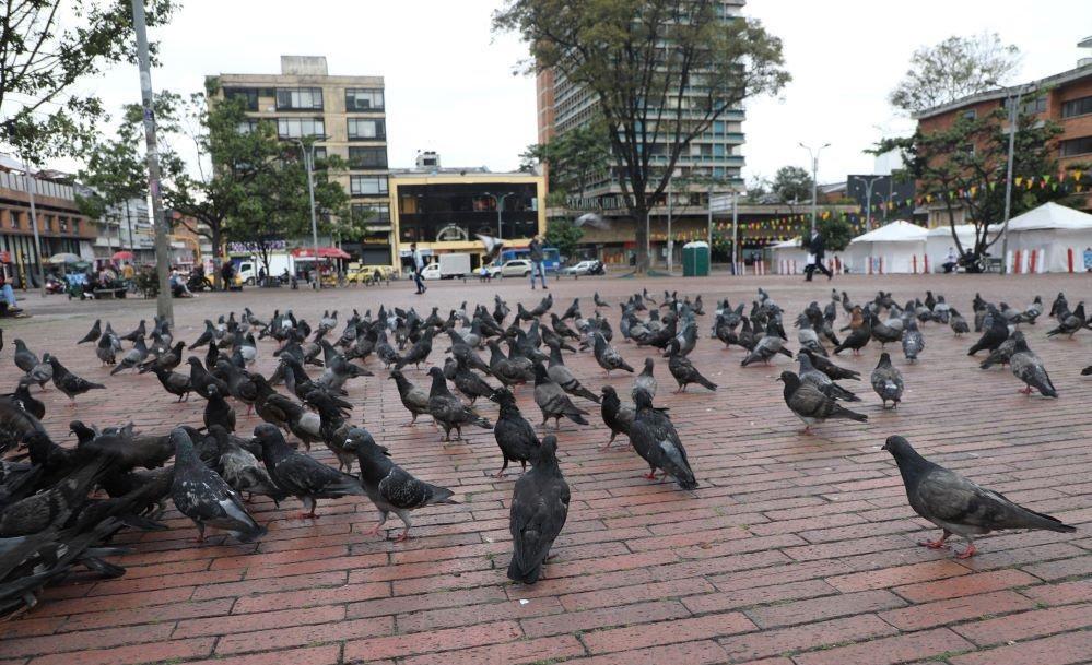 Imagen de palomas
