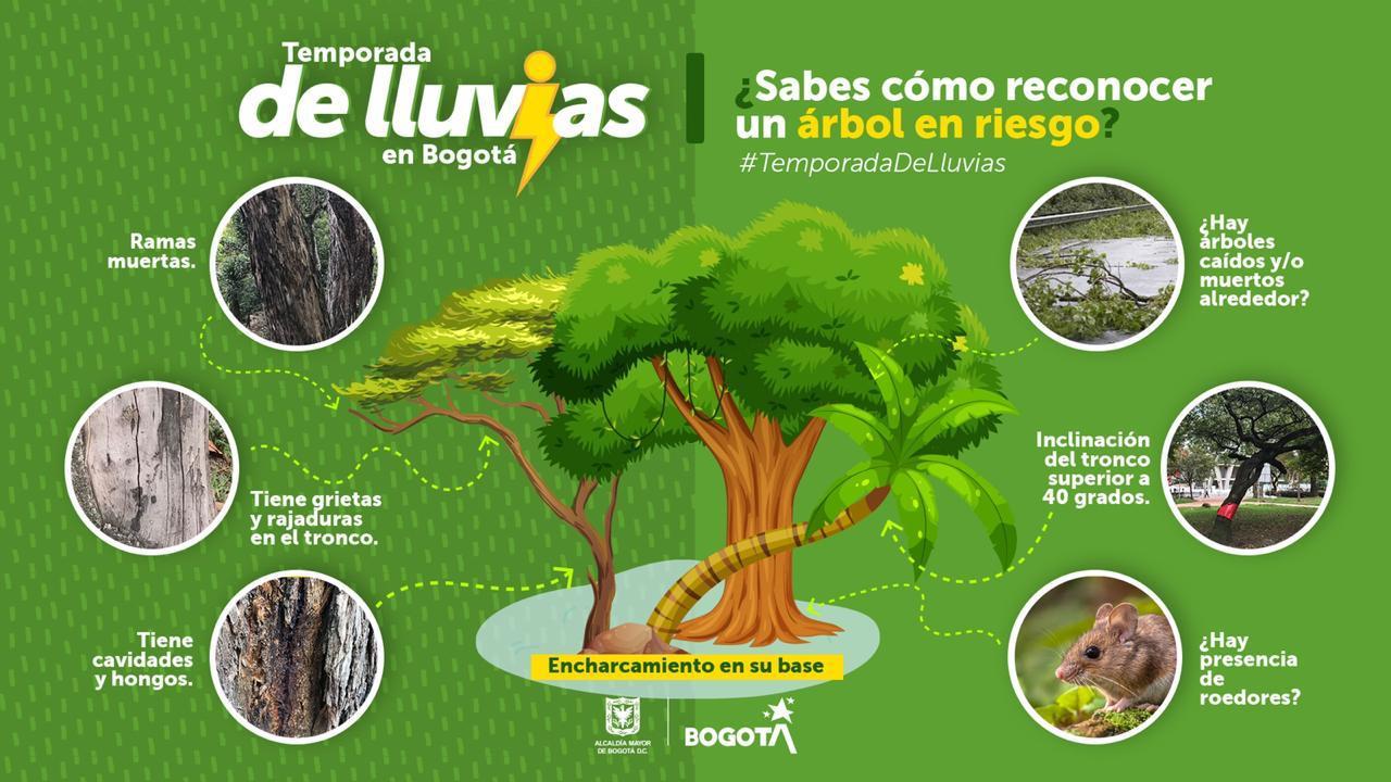 Aprenda a identificar un árbol en riesgo de caída