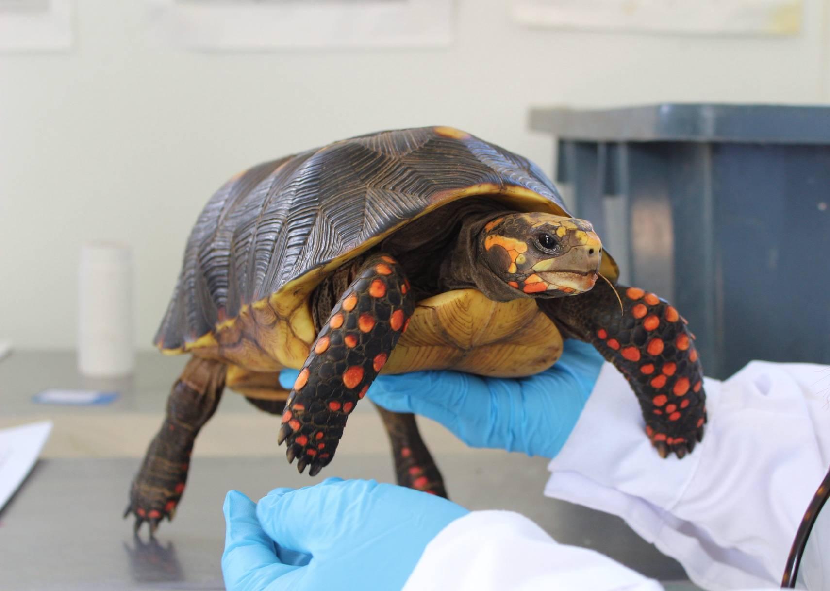 Imagen de una tortuga morrocoy