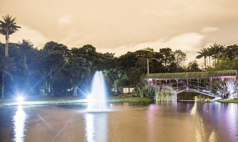 Última noche de cultura y arte del año en el Jardín Botánico. Foto: Jardín Botánico