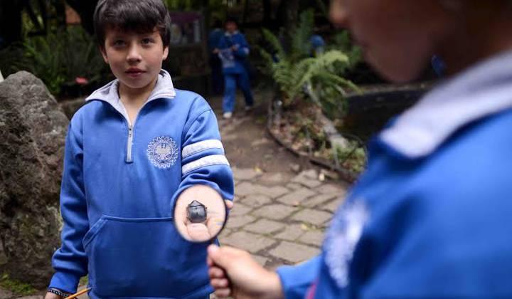 Educación ambiental - Portal Bogotá - Foto:educacionbogota.edu.co