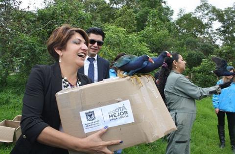 Liberación de tinguas azules - Foto: Prensa Secretaría de Ambiente