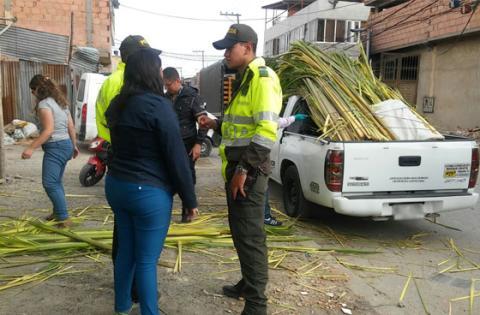 Dos capturados y más de 1500 kilos de palma de vino incautados en Bogotá