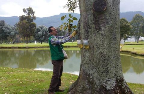 Recuperación de árboles - Foto:  Archivo Particular