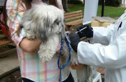 Vacunación canina - Foto: Secretaría de Salud
