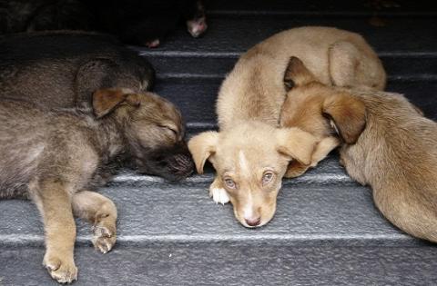 Protección animal - Foto: Diego Bauman