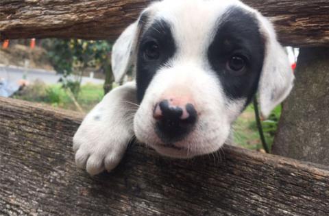 En Bogotá hay 6500 voluntarios para defender a las mascotas