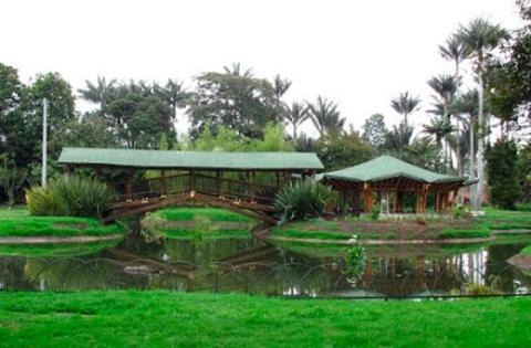 Disfrute las actividades que tiene el jard n bot nico for Talleres jardin botanico