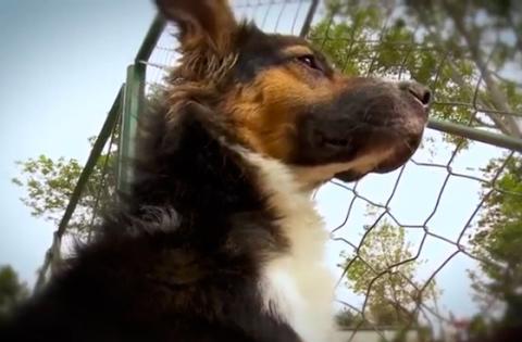 Bogotá promueve la adopción canina