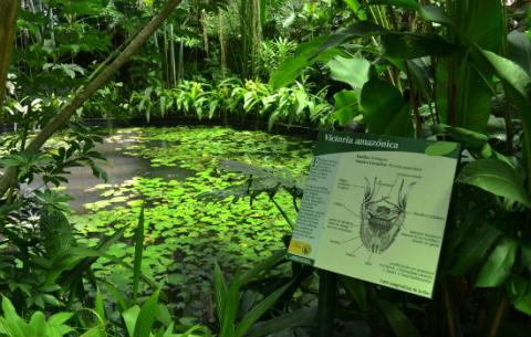 Especies de plantas jard n bot nico jose celestino mutis for Plantas de un jardin botanico