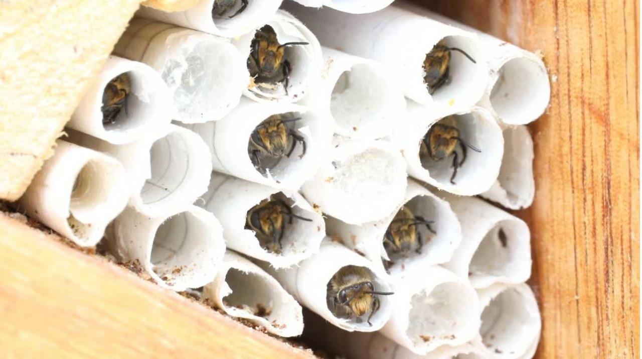 'Hoteles' para abejas