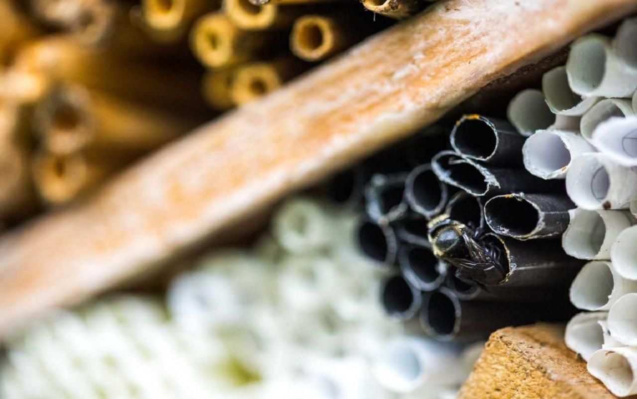 'Hoteles' para abejas en Jardín Botánico