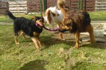 Caninos - Foto: Transmilenio