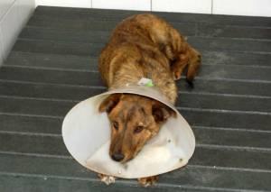 Protección animal - Foto: Secretaría de Salud