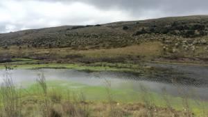 El rincón verde más hermoso de Bogotá