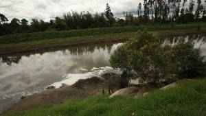 Entre Bogotá y Soacha, el río Bogotá recibe a diario 800 toneladas de materia orgánica.
