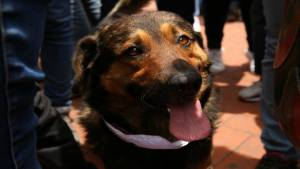 Jornada de Adopción - FOTO: Consejería de Comunicaciones Alcaldía Mayor