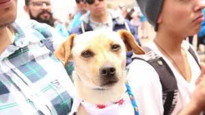 Jornada de Adopción. Foto: Alcaldía Mayor