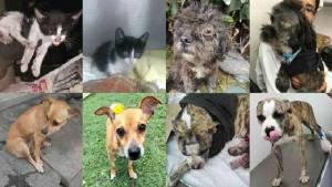 La Alcaldía de Bogotá está comprometida con el rescate de animales bandonados en Bogotá. Fotos: Semana.com