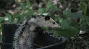 Este es uno de los animales liberados.