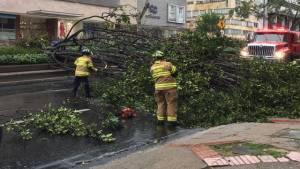 Bomberos de Bogotá atendiendo una emergencia por árbol caído