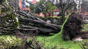 solo este año, 417 árboles se han desplomado en Bogotá