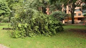El Distrito plantará más de 100 árboles en el parque El Virrey - Foto: Jardín Botánico Bogotá
