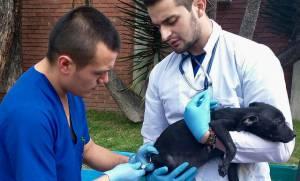 Urgencias Veterinarias en Bogotá - Foto: Secretaría de Salud