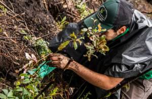 Vecinos y Jardín Botánico sembraron 200 árboles en Kennedy