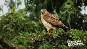 Concurso de fotografía sobre fauna bogotana - Foto: Secretaría de Cultura