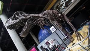 Rodolfo Llinás dona dinosaurio gigante a Maloka - Foto: Comunicaciones Maloka