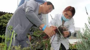 Ecoterapia - Foto: Secretaría de Salud