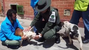 El Escuadrón Anticrueldad ha rescatado a más de 80 animales este año. Foto: Prensa Protección Animal