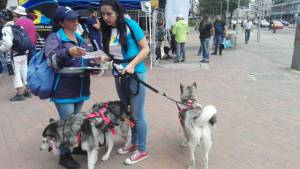 En las calles, funcionarios de Aguas Bogotá capacitan a los propietarios de animales.