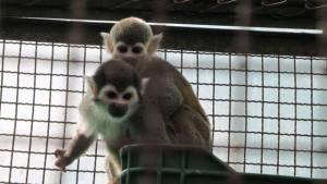 En enero Bogotá recuperó 418 animales silvestres