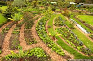 Agricultura Urbana - Foto: Jardín Botánico de Bogotá