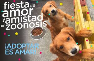 Campaña adopción de perros y gatos - Imagen: Secretaría de Salud