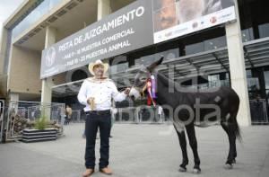 Feria de las Colonias - Foto: Corferias