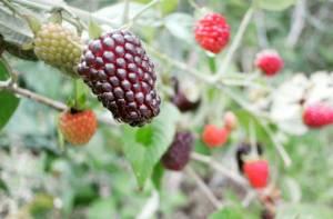 Frutas exóticas - Foto: CUN