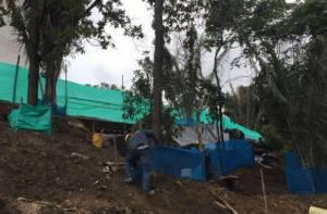 Intervención de árboles - Foto: Secretaría de Ambiente