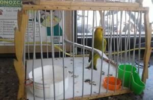 Caza ilegal de especies en Bogotá - Foto: Prensa Policía Metropolitana de Bogotá
