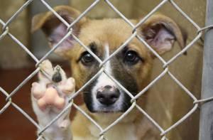 Adopción, una alternativa para perros y gatos