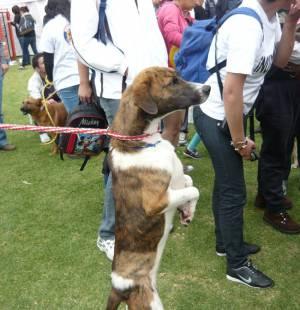 Perros - Foto: Alcaldía Mayor de Bogotá