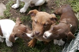 Perros cachorros - Foto: Secretaría de Salud