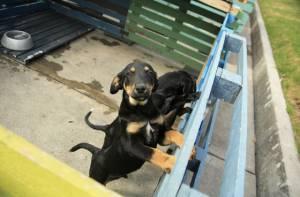 Recolección canina, un aporte a la salud pública de Bogotá
