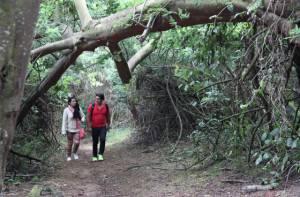Pilas con los árboles en riesgo en época de lluvias